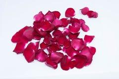 Rose de rouge de milieux de plan rapproché sur les milieux blancs Photos libres de droits