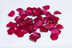 Rose de rouge de milieux de plan rapproché sur les milieux blancs Photo stock