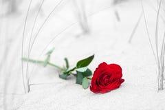 Rose de rouge sur la plage photographie stock libre de droits