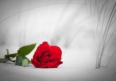 Rose de rouge sur la plage Couleur contre noir et blanc Photo libre de droits