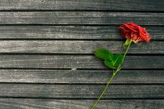 Rose de rouge sur le fond en bois foncé Photo libre de droits