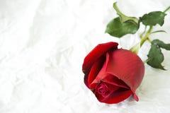 Rose de rouge sur le papier froissé photographie stock