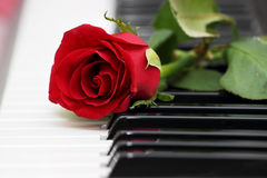 Rose de rouge sur le piano, l'amour et la musique Photos libres de droits