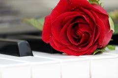 Rose de rouge sur le piano, l'amour et la musique Image stock