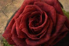 Rose de rouge sur le rétro fond grunge Photographie stock