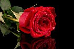 Rose de rouge sur un fond noir avec la réflexion photographie stock