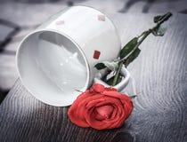 Rose de rouge, thème d'amour de vintage Photographie stock libre de droits