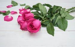 Rose de rose sur le fond en bois de hite Photographie stock