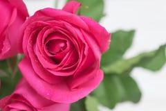Rose de rose sur le fond en bois de hite Images stock