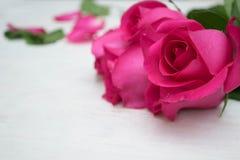 Rose de rose sur le fond en bois de hite Image libre de droits