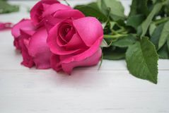 Rose de rose sur le fond en bois de hite Images libres de droits