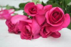 Rose de rose sur le fond en bois de hite Photos libres de droits