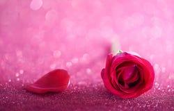 Rose de Valentine Photos stock