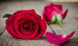 Rose dei biglietti di S. Valentino fotografia stock