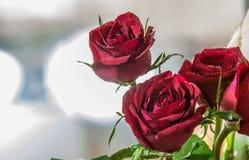 Rose 2 del primo piano Fotografia Stock