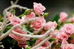 rose delikatnie Obraz Stock