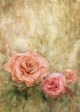 Rose dell'acquerello su struttura della parete di lerciume Fotografia Stock