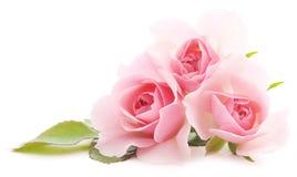 Rose dentellare Fotografia Stock