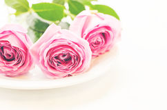 Rose dentellare Fotografie Stock Libere da Diritti