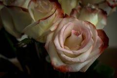 Rose dentellare e gialle Fotografia Stock