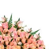 Rose dentellare luminose Immagine Stock Libera da Diritti