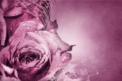 Rose dentellare - priorità bassa Immagine Stock Libera da Diritti