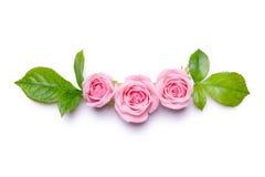 Rose dentellare su una priorità bassa bianca Confine dei fiori Modello per la carta dell'invito Fotografie Stock