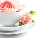 Rose dentellare in una tazza bianca Fotografie Stock Libere da Diritti