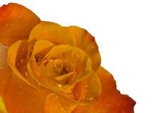 Rose in der Ecke lizenzfreie stockfotografie