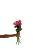 Rose in der Hand Stockfotos