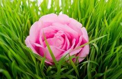 Rose in der Mitte der Zusammensetzung Stockbild