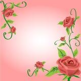 Rose design vector illustration