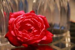 Rose devant les verres de vin à l'envers Images stock
