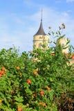 Rose di arbusto e vecchio castello immagini stock