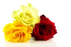 Rose di fascino del mazzo Fotografie Stock