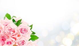 Rose di fioritura rosa Fotografie Stock Libere da Diritti