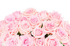 Rose di fioritura rosa Fotografia Stock Libera da Diritti