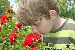 Rose di fiuto del ragazzo. immagini stock