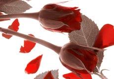Rose di giorno dei biglietti di S. Valentino fotografia stock libera da diritti