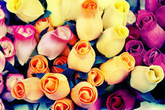 Rose di legno Fotografia Stock Libera da Diritti