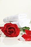 Rose di neolatino Fotografia Stock Libera da Diritti