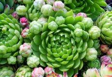 Rose di pietra verdi Fotografie Stock Libere da Diritti