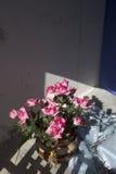 Rose di plastica rosa Fotografie Stock