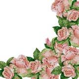 Rose di rosa del mazzo dell'acquerello Angolo floreale dell'illustrazione Fotografia Stock