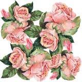 Rose di rosa del mazzo dell'acquerello Illustrazione floreale per la congratulazione Fotografia Stock Libera da Diritti