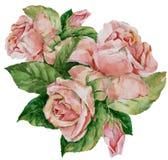 Rose di rosa del mazzo dell'acquerello Priorità bassa floreale astratta Immagini Stock