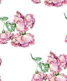 Rose di rosa del ramo dell'acquerello Reticolo senza giunte floreale Immagini Stock