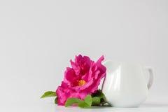 Rose di rosa selvaggio in vaso sulla tovaglia bianca Fotografie Stock
