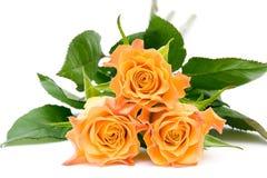Rose di tè immagine stock