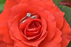 Rose with diamond ring Stock Photos